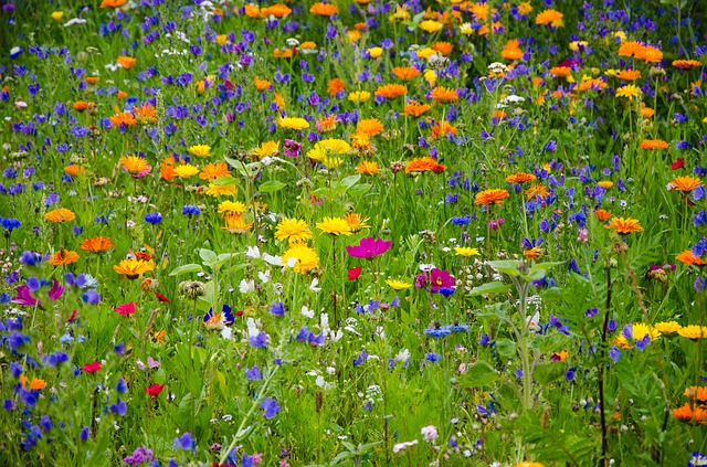 flower meadow 2509969 640